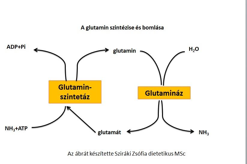 fogyni glutamin legjobb zsírégető természetes kiegészítők