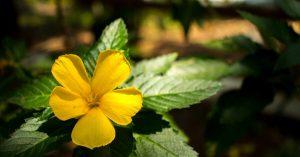 nigériai gyógynövények, amelyek zsírt égetnek