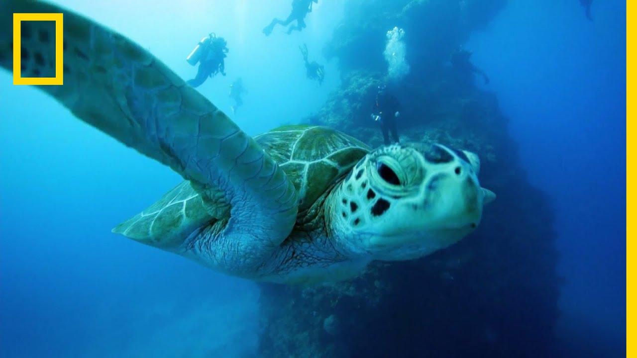 Mikor fogyott a teknős?