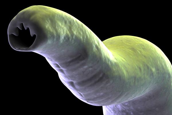 galandféreg fogyni biztonságos