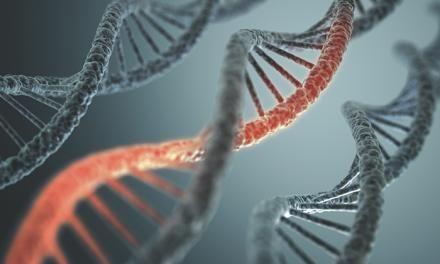 MTHFR C677T mutáció: Elsődleges kezelési protokoll