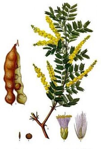 fogyókúrás gyógynövények Ugandában