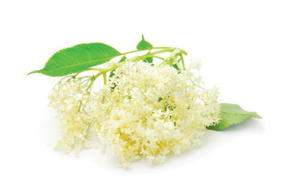 keleti gyógynövények a fogyáshoz fogyni kötés
