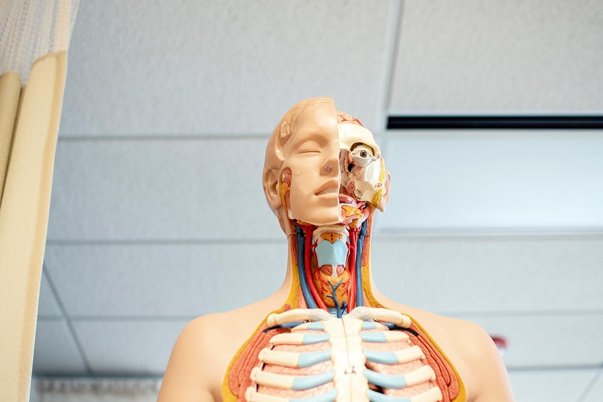 tinnitus okozhat fogyást