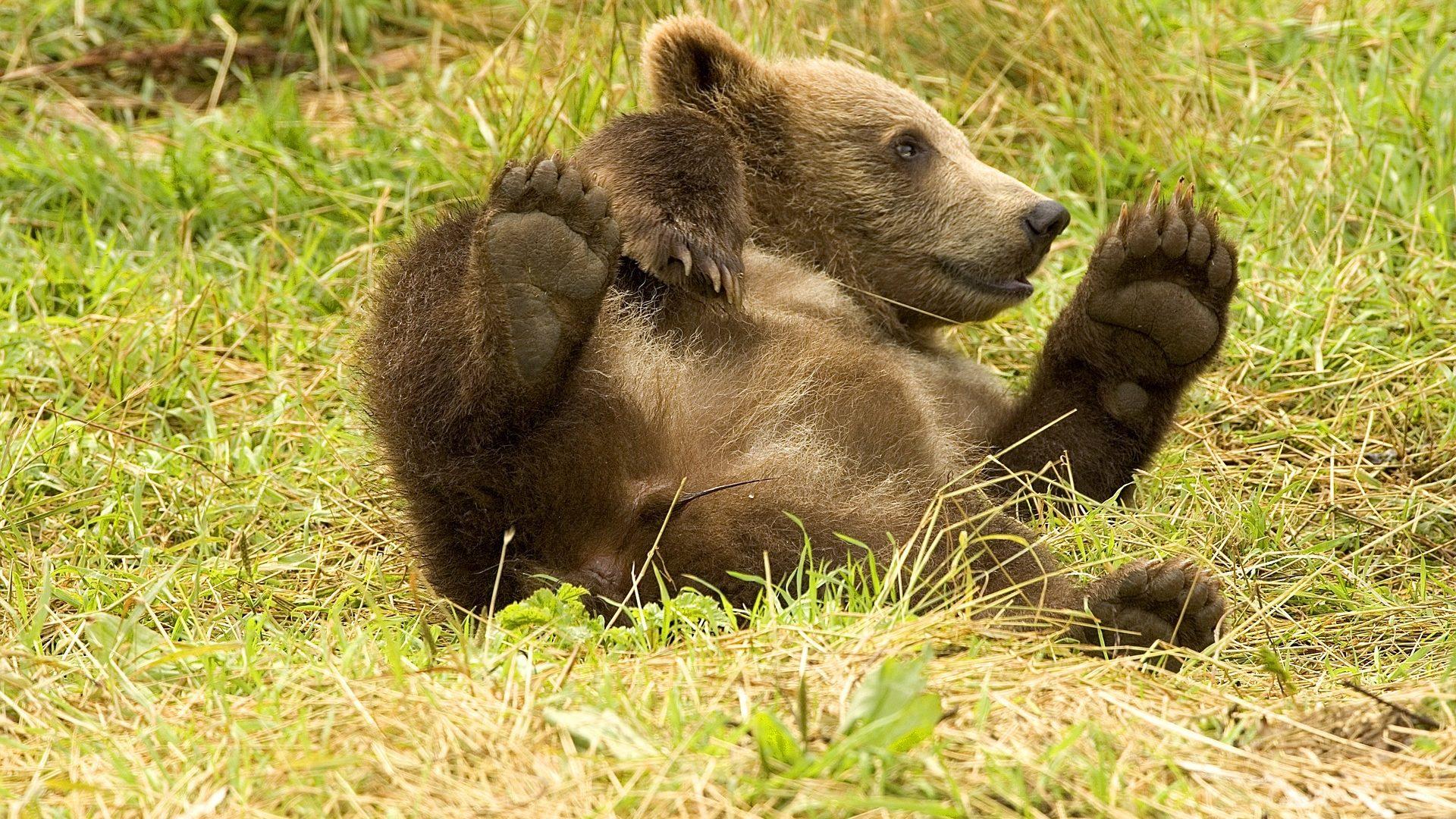 Éva Medve (medveeva) - Profile   Pinterest