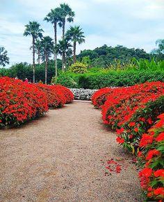 hely botanikai fogyókúrája