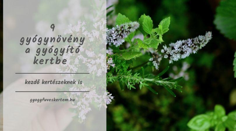 hogyan lehet fogyni a természetes gyógynövények felhasználásával