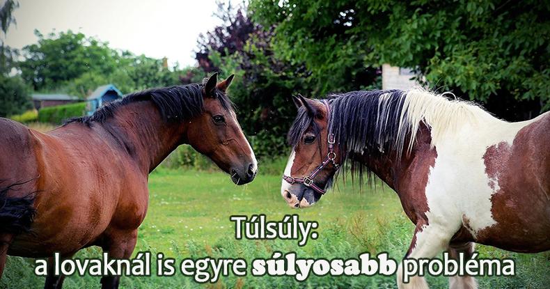 ló metabolikus szindróma és fogyás