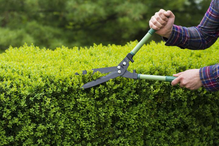 lefogy a kertészkedés